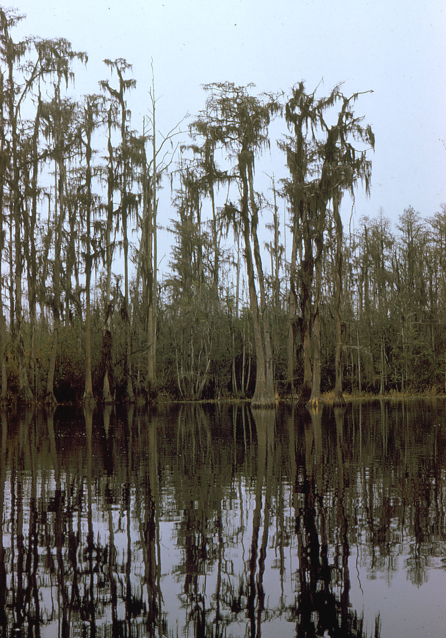 an introduction to the geography of the okefenokee swamp Okefenokee swamp park things to do in waycross the okefenokee heritage center houses a museum which provides a host of information about the various groups that have been instrumental in shaping the region's history.
