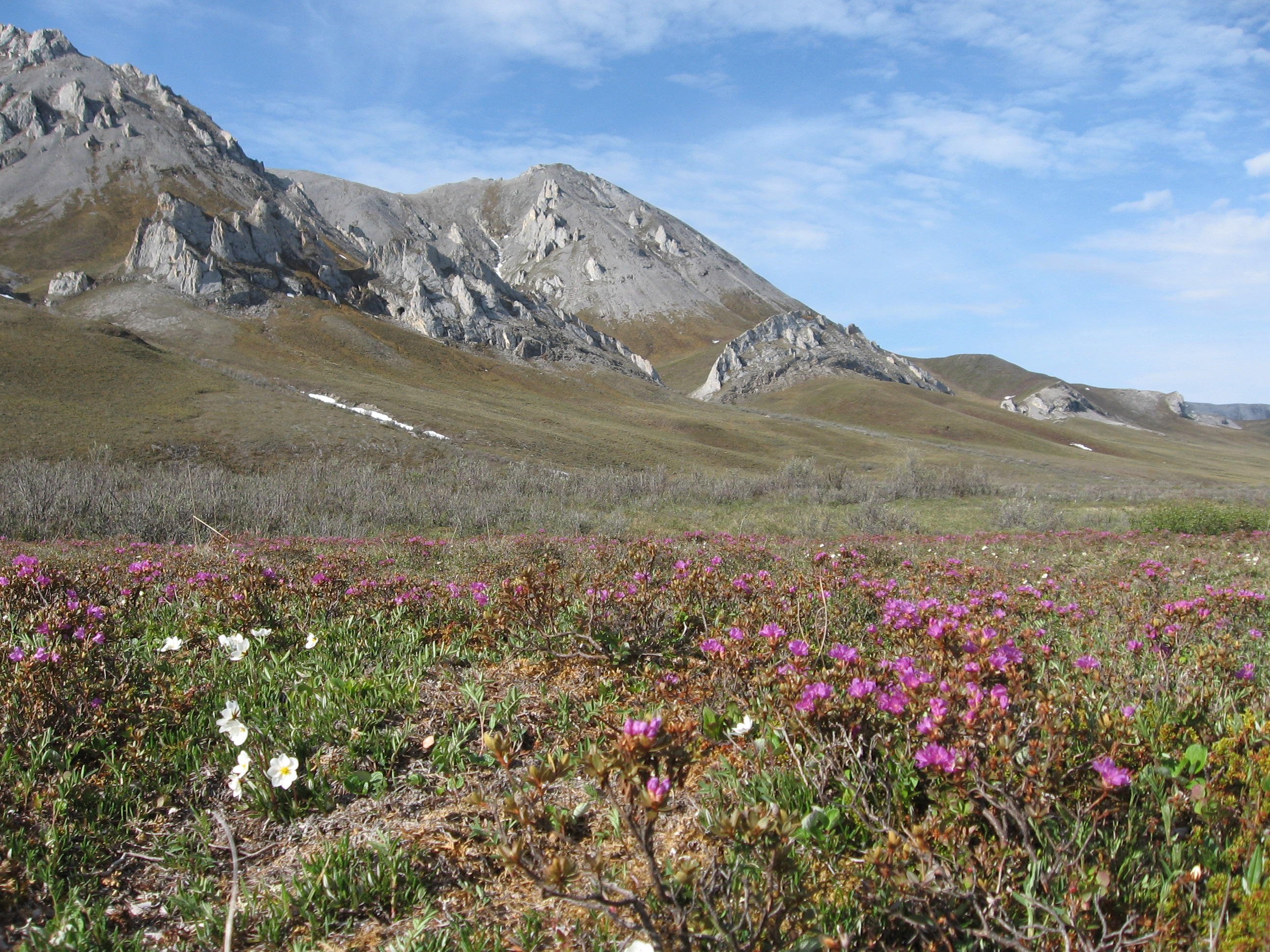 Tundra Vegetation Broo...