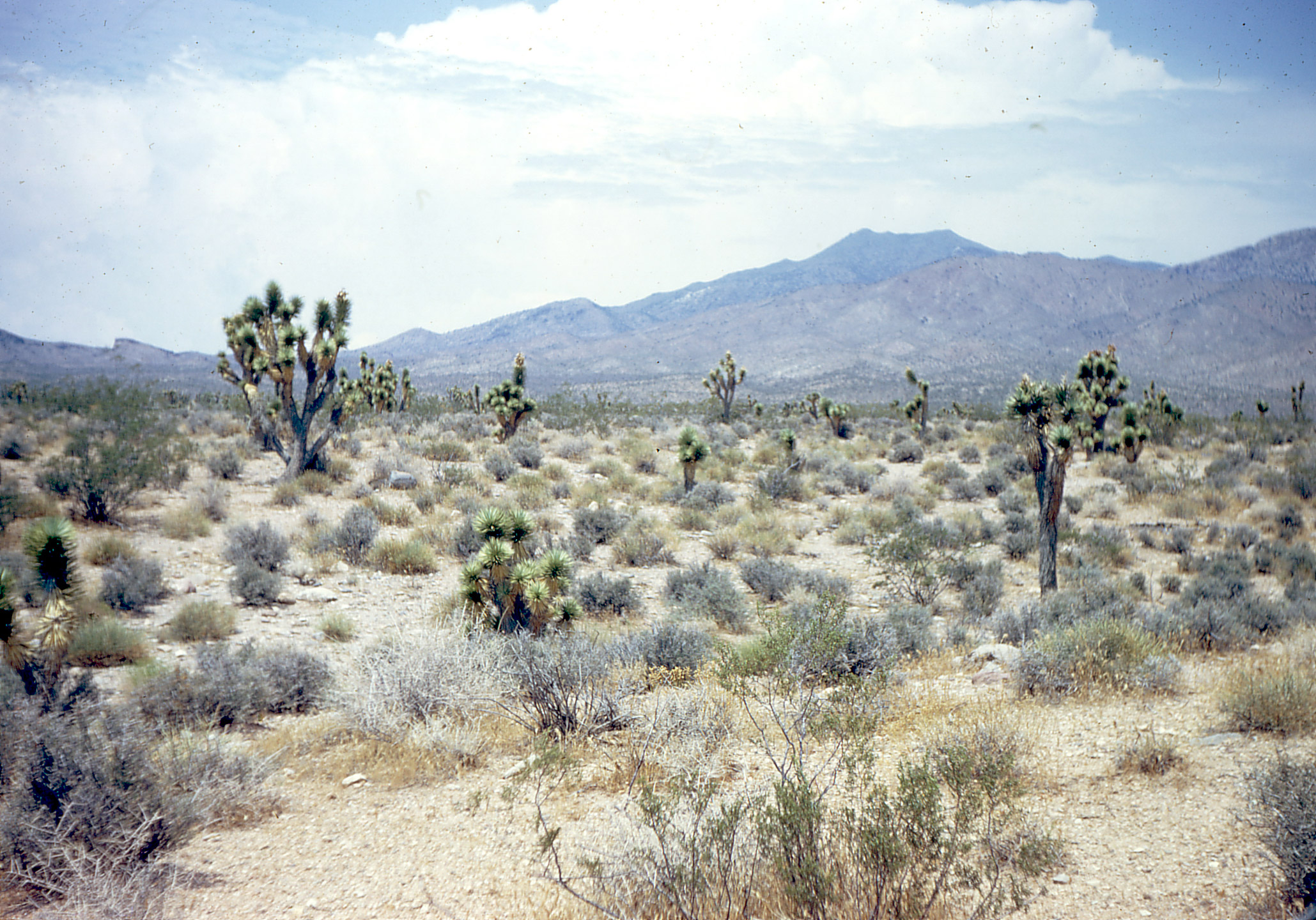 mojave desert Please donate-----mountain hardware mojave river valley museum: the whole mojave the mojave desert occupies a significant portion of southern california and parts of utah, nevada, and.