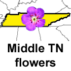 Middle Tennessee flower list
