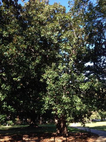 Image http://bioimages.vanderbilt.edu/lq/baskauf/w2015-10-07-09-41-12.jpg