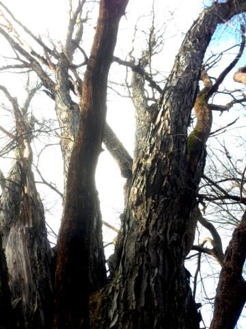 Image http://bioimages.vanderbilt.edu/lq/baskauf/w2016-01-02-10-19-40.jpg