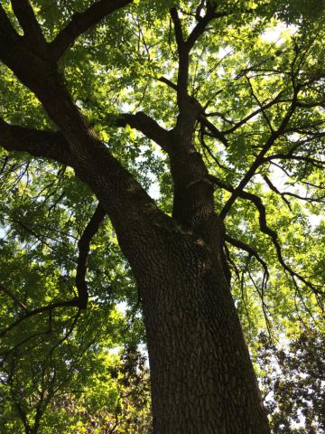 Image http://bioimages.vanderbilt.edu/lq/baskauf/w2016-05-13-14-15-11.jpg