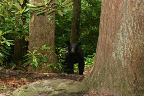 Image http://bioimages.vanderbilt.edu/lq/baskauf/w49403.jpg