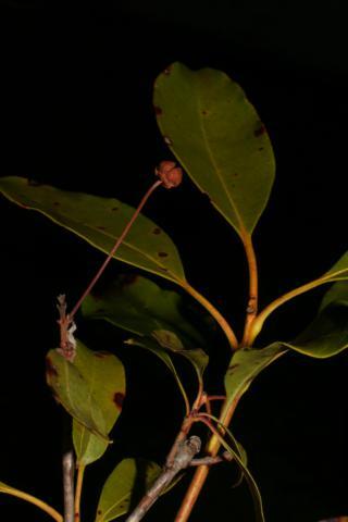 Image http://bioimages.vanderbilt.edu/lq/baskauf/w50582.jpg
