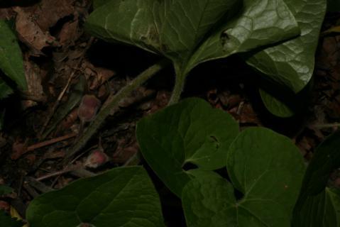 Image http://bioimages.vanderbilt.edu/lq/baskauf/w51519.jpg