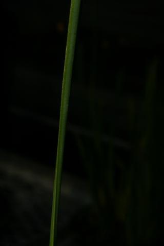 Image http://bioimages.vanderbilt.edu/lq/baskauf/w66816.JPG