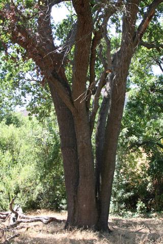 Image http://bioimages.vanderbilt.edu/lq/baskauf/w66951.jpg