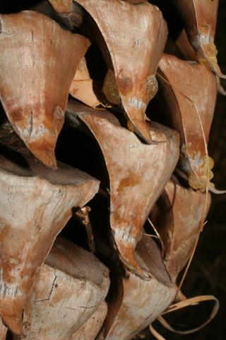 Image http://bioimages.vanderbilt.edu/lq/baskauf/w67115.jpg