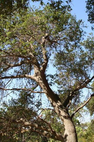 Image http://bioimages.vanderbilt.edu/lq/baskauf/w67124.jpg