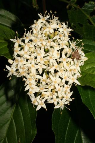 Image http://bioimages.vanderbilt.edu/lq/baskauf/w67214.jpg