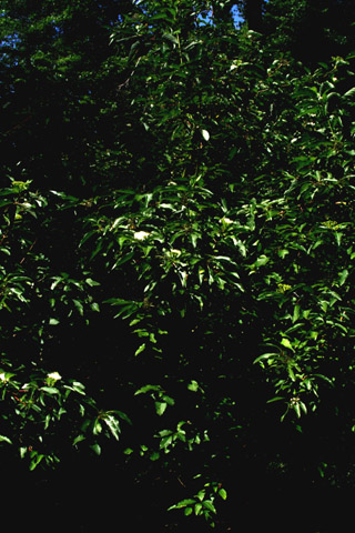 Image http://bioimages.vanderbilt.edu/lq/baskauf/w67233.jpg