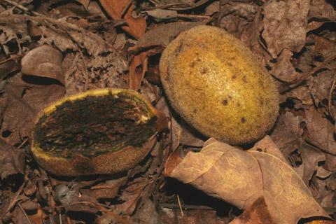 Image http://bioimages.vanderbilt.edu/lq/baskauf/w70803.jpg