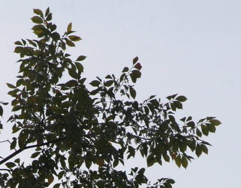 Image http://bioimages.vanderbilt.edu/lq/baskauf/w70890.jpg