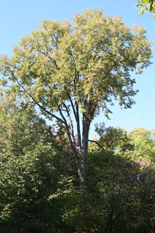 Image http://bioimages.vanderbilt.edu/lq/baskauf/w70898.jpg