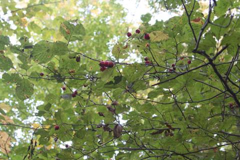 Image http://bioimages.vanderbilt.edu/gq/baskauf/g70906.jpg