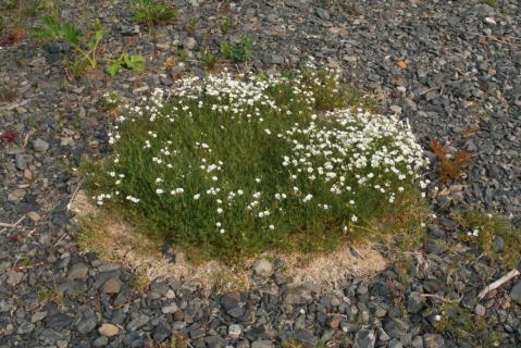 Image http://bioimages.vanderbilt.edu/lq/baskauf/w74816.jpg