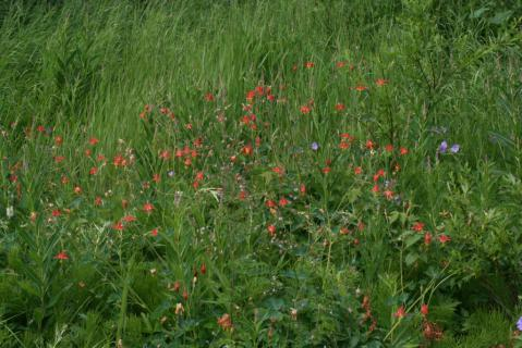 Image http://bioimages.vanderbilt.edu/lq/baskauf/w74906.jpg