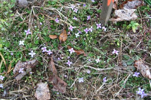 Image http://bioimages.vanderbilt.edu/lq/baskauf/w87881.jpg
