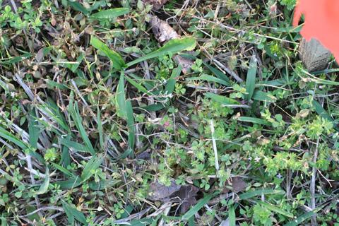 Image http://bioimages.vanderbilt.edu/lq/baskauf/w87925.jpg
