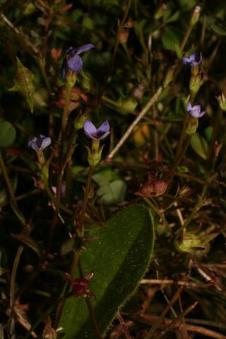 Image http://bioimages.vanderbilt.edu/lq/baskauf/w87936.jpg