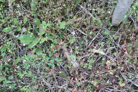 Image http://bioimages.vanderbilt.edu/lq/baskauf/w87939.jpg