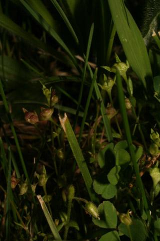 Image http://bioimages.vanderbilt.edu/lq/baskauf/w87952.jpg