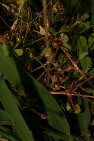 Image http://bioimages.vanderbilt.edu/lq/baskauf/w87961.jpg