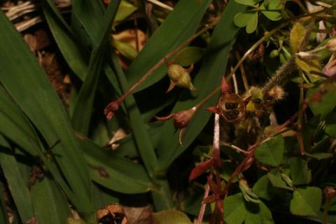 Image http://bioimages.vanderbilt.edu/lq/baskauf/w87962.jpg