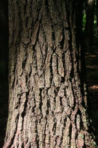 Image http://bioimages.vanderbilt.edu/lq/baskauf/w90151.jpg