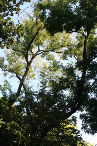 Image http://bioimages.vanderbilt.edu/lq/baskauf/w90687.jpg
