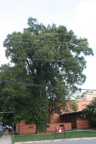 Image http://bioimages.vanderbilt.edu/lq/baskauf/w90694.jpg