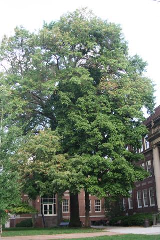 Image http://bioimages.vanderbilt.edu/lq/baskauf/w90696.jpg