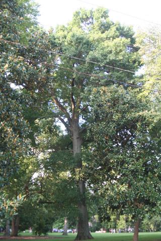 Image http://bioimages.vanderbilt.edu/lq/baskauf/w90701.jpg
