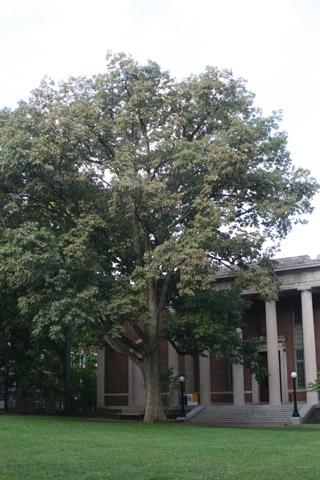 Image http://bioimages.vanderbilt.edu/lq/baskauf/w90718.jpg
