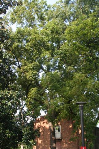 Image http://bioimages.vanderbilt.edu/lq/baskauf/w90752.jpg
