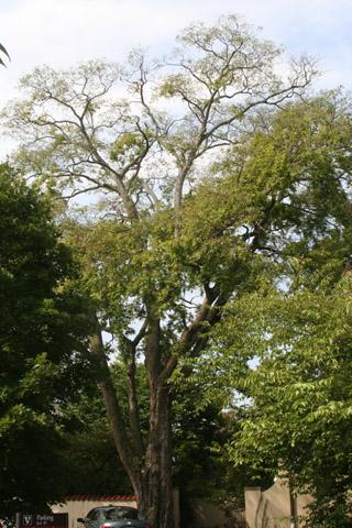 Image http://bioimages.vanderbilt.edu/lq/baskauf/w90764.jpg