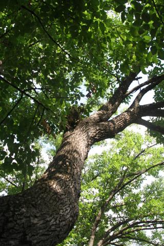 Image http://bioimages.vanderbilt.edu/lq/baskauf/w90789.jpg