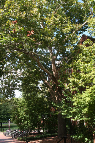 Image http://bioimages.vanderbilt.edu/lq/baskauf/w90911.jpg