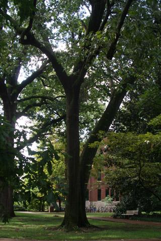Image http://bioimages.vanderbilt.edu/lq/baskauf/w90913.jpg