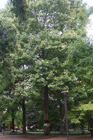 Image http://bioimages.vanderbilt.edu/lq/baskauf/w90945.jpg
