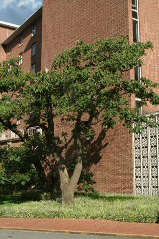 Image http://bioimages.vanderbilt.edu/lq/baskauf/w90997.jpg