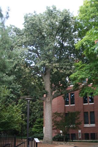 Image http://bioimages.vanderbilt.edu/lq/baskauf/w91004.jpg