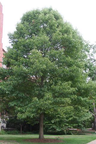 Image http://bioimages.vanderbilt.edu/lq/baskauf/w91067.jpg