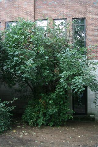 Image http://bioimages.vanderbilt.edu/lq/baskauf/w91069.jpg