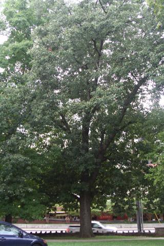 Image http://bioimages.vanderbilt.edu/lq/baskauf/w91105.jpg