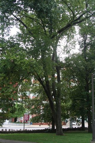 Image http://bioimages.vanderbilt.edu/lq/baskauf/w91107.jpg