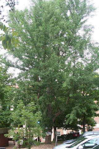 Image http://bioimages.vanderbilt.edu/lq/baskauf/w91126.jpg