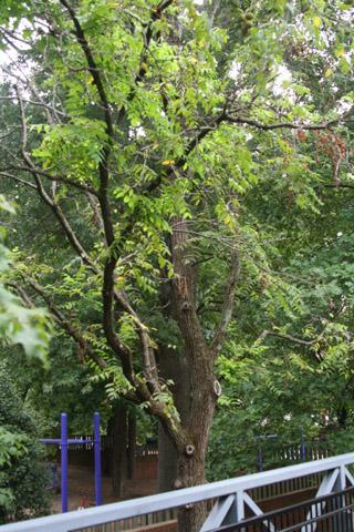 Image http://bioimages.vanderbilt.edu/lq/baskauf/w91127.jpg
