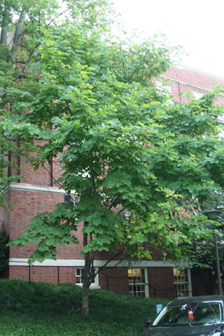 Image http://bioimages.vanderbilt.edu/lq/baskauf/w91137.jpg